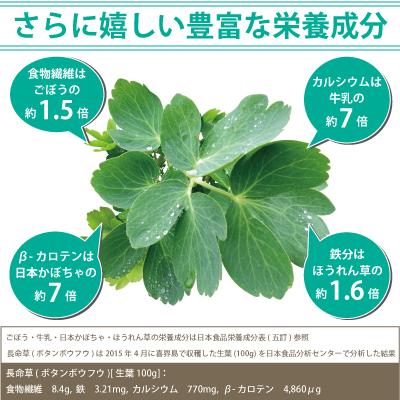 喜界島産長命草(ボタンボウフウ) 驚きの栄養素